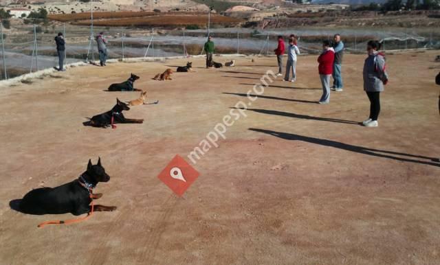 Sermucan: Servicios Multiples Caninos